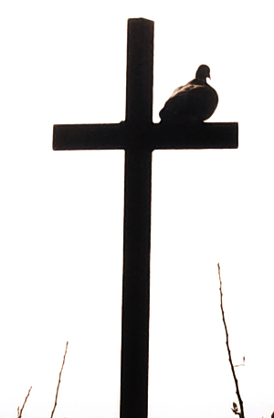 a picture of a cross with a bird