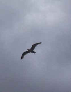 a photo of a seagull against grey thunderclouds
